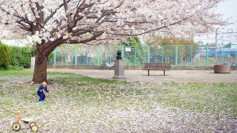 cherryblossoms09